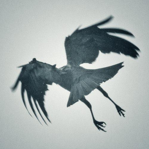 crowback